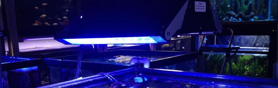 Aquarium Lighting in Springfield MO